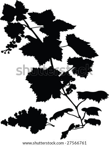 grape vine clipart. grape vine clipart. stock vector : grape vine; stock vector : grape vine