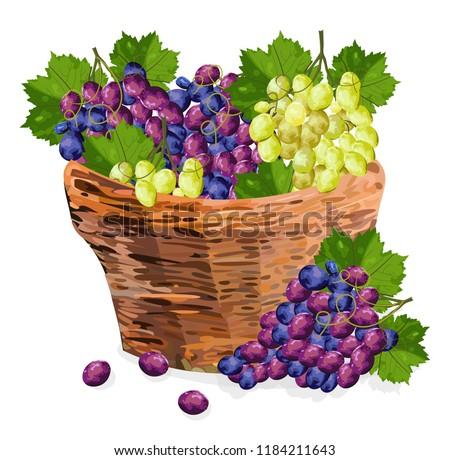 grapes bunch watercolor basket