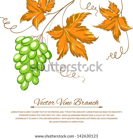 Grapes with autumn leaves around the grapes. Vector illustration.