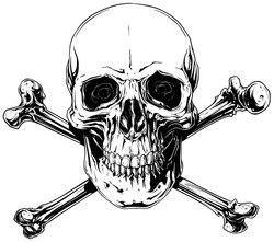 Graphic black and white detailed human skull with crossed bones vector