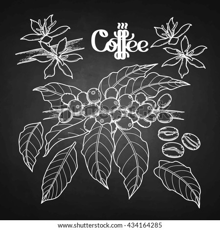 graphic coffee set isolated on