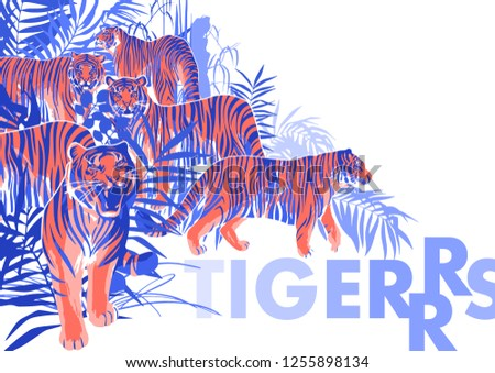 Stock Photo Graphic design with tigers standing, walking and roaring among the exotic leaves and trees. Vector art isolated on white background