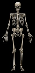 Graphic detailed colorful human bone skeleton with skull. Isolated on black background. Vector icon.