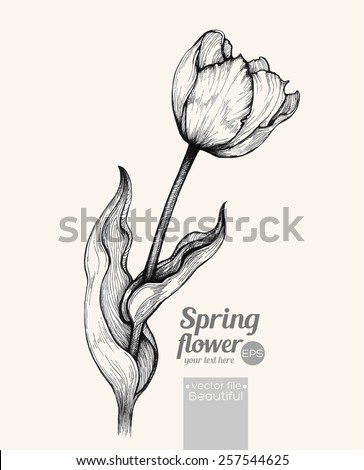Graphic vector illustration of tulip on a beige background Hand drawn artwork Love concept for wedding invitations cards tickets congratulations branding Gift for young girl and women