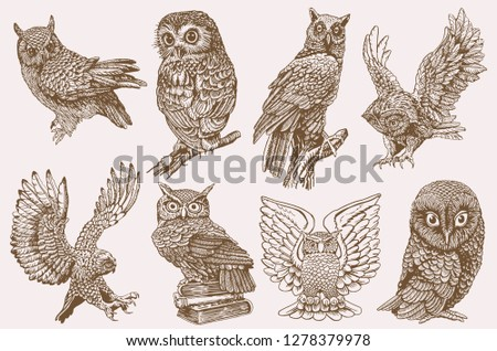 graphical collection of owls