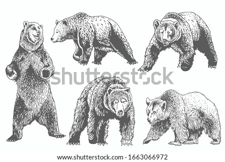 Graphical grey grizzly bears set isolated on white,vector illustration Stock fotó ©