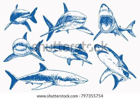 graphical set of blue sharks