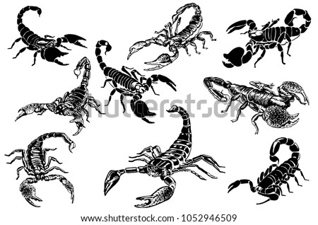 graphical set of scorpions
