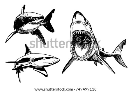 graphical set of sharks
