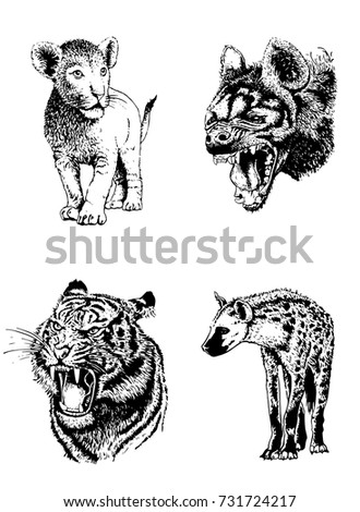 Graphical set of wild animals isolated on white background,hyena,tiger and lion.Vector illustration