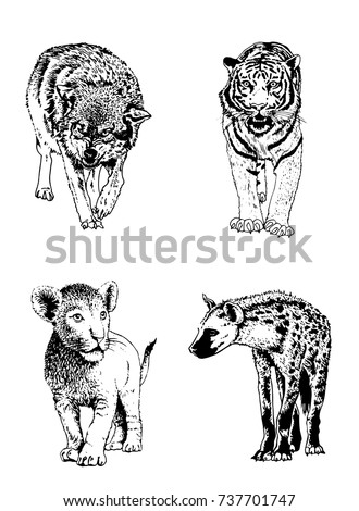 Graphical set of wild animals isolated on white background, vector lion,tiger, wolf and hyena for tattoo,coloring and printing