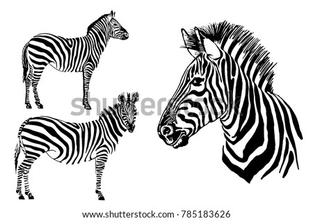 graphical set of zebra isolated