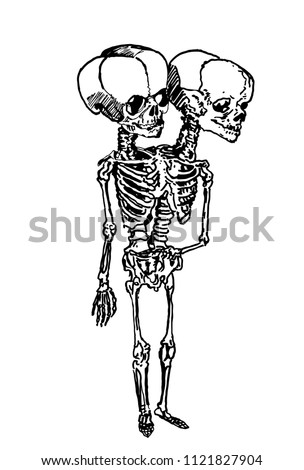 graphical skeleton of siamese
