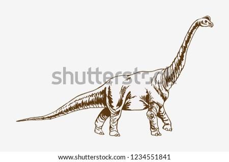 Graphical vintage diplodocus ,vector sketch, dinosaur walking
