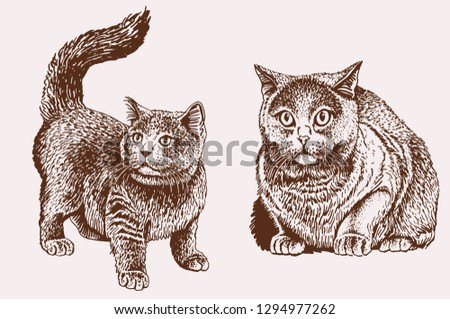 Graphical vintage set of cats ,retro illustration, vector illustration