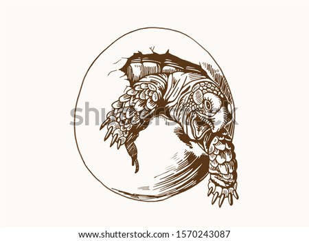Graphical vintage sketch of tortoise in egg ,sepia background,vector illustration