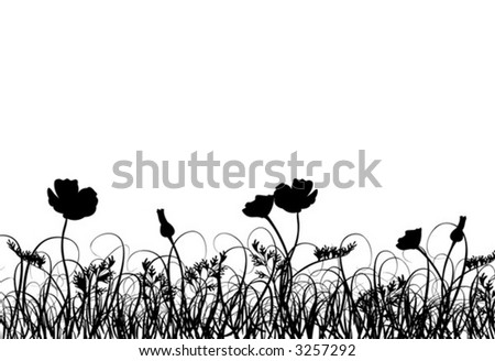 Grass and poppy, vector illustration