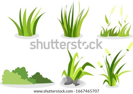 grass assets, type of grass, grass for assets.