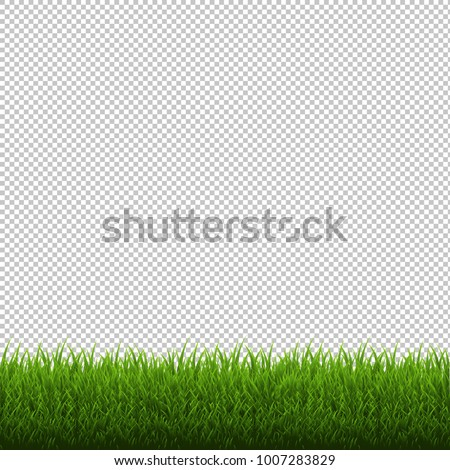 Grass Border Isolated Transparent Background, Vector Illustration