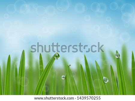 grass in droplets of water