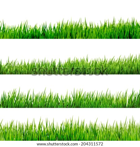 grass isolated on white and