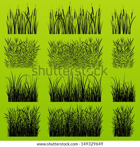 grass  reed and wild plants
