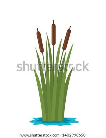 grass reed in the water of the