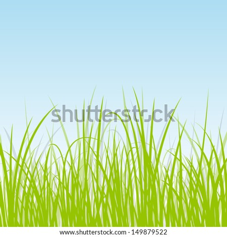 grass  wild plants detailed
