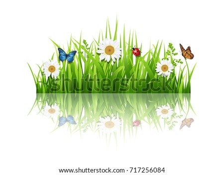 grass with flowers background
