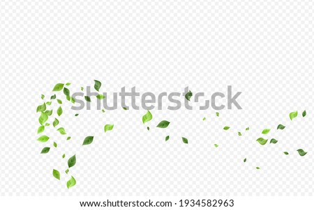 Grassy Leaf Herbal Vector Transparent Background Concept. Fresh Greenery Wallpaper. Forest Leaves Tree Border. Foliage Abstract Banner.