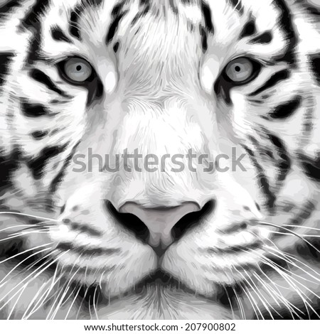 Gray scale closeup portrait of a white bengal tiger. Oil painting style. The biggest cat. Wild beauty of the most dangerous and mighty beast. Vector illustration