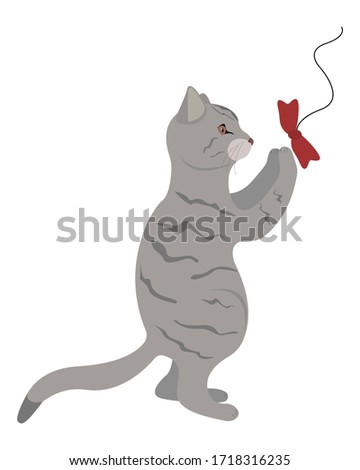 gray tabby cat standing on two