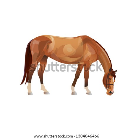 grazing chestnut horse vector