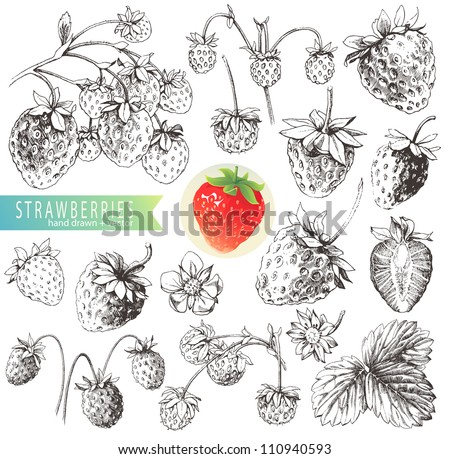 Great collection of hand drawn strawberries isolated on white background.