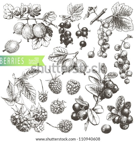 Great hand drawn illustrations of berries isolated on white background.