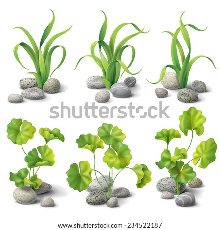 Green algae and stones set isolated on white.
