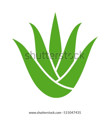 Green aloe vera plant with leaves flat vector color icon for apps and websites