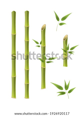 Green bamboo branches and leaves. Realistic 3d Detailed Bamboo Shoots Set