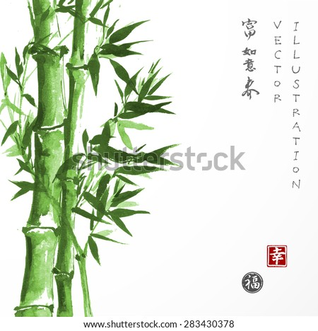 green bamboo hand drawn in