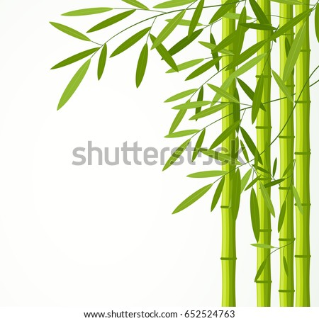 green bamboo stems with leaves