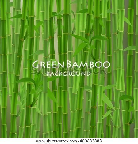 stock-vector-green-bamboo-vector-illustration