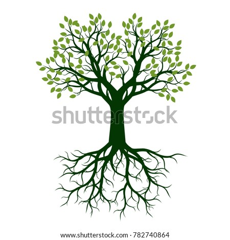 Green beautiful Tree with Leaves. Vector Illustration.