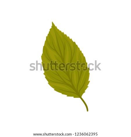 green beech leaf vector