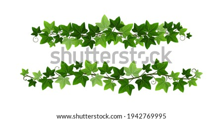 Green climbing ivy creeper branches isolated on white background. Hedera vine botanical border or frame design element. Vector illustration of hanging or wall climbing ivy plant Foto stock ©
