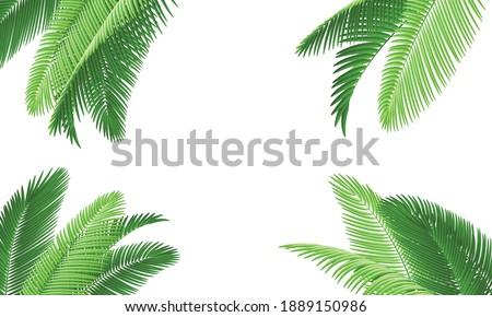 Green coconut leaves for background.Vector.Illustration.