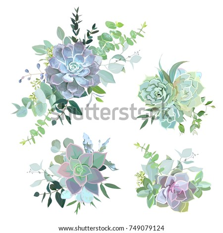 Green colorful succulent bouquets vector design objects. Eucalyptus selection, echeveria, herbs, various plants and leaves. Natural greenery set. All elements are isolated and editable