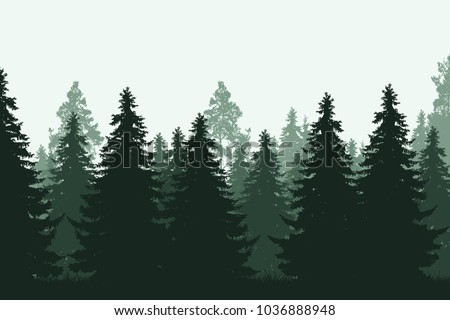green coniferous forest with