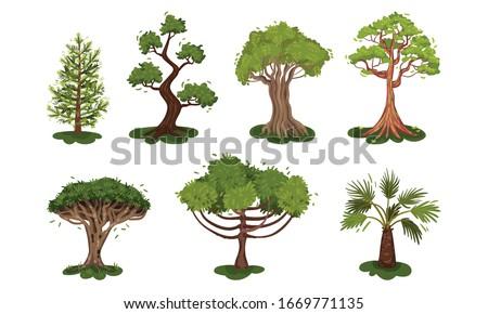 Green Deciduous Trees with Exuberant Tree Crown Vector Set