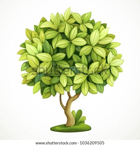 green decorative little tree