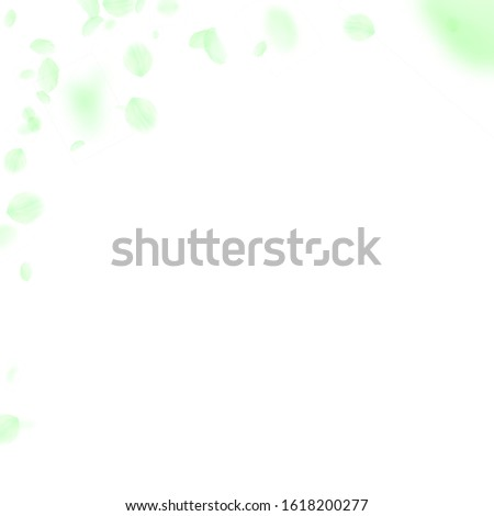 Green flower petals falling down. Noteworthy romantic flowers corner. Flying petal on white square background. Love, romance concept. Admirable wedding invitation.
